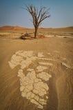 Dött träd i Sossusvlei Royaltyfria Foton
