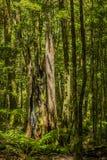 Dött träd i träna Royaltyfria Foton