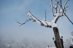 Dött träd i vinter Royaltyfri Foto