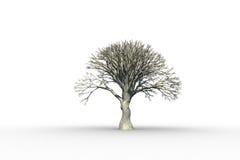 Dött träd med inga sidor Royaltyfri Bild
