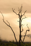 Dött träd med tappningbegrepp Arkivbild