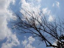 Dött träd på bakgrunden för blå himmel Arkivbild