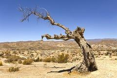 Dött träd på den Tabernas öknen i Spanien Arkivbild