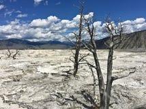 Dött träd på den Yellowstone nationalparken royaltyfri bild