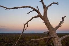 Dött träd på krater av månen Arkivbild