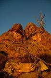 Dött träd på Mt Arapiles royaltyfri bild