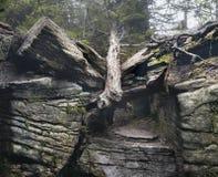 Dött träd som är stupat på en Catskill slinga royaltyfri foto