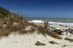 Dött träd som ashore kommas med på Tauparikaka Marine Reserve, Nya Zeeland Arkivbilder