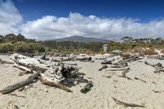 Dött träd som ashore kommas med på Tauparikaka Marine Reserve, Nya Zeeland royaltyfri fotografi