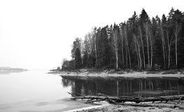 Dött träd som ligger på kusten Arkivfoto