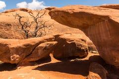 Dött träd som omges av orange stenblock Royaltyfri Fotografi