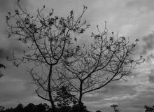 Dött träd utan sidor Arkivbild