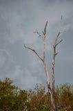 Dött trädanseende Arkivfoto