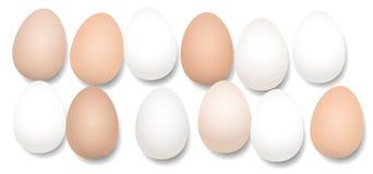 Dúzia ovos doze partes Fotografia de Stock Royalty Free