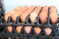 Dúzias dos ovos na cabine que vendeu na mercearia Foto de Stock Royalty Free