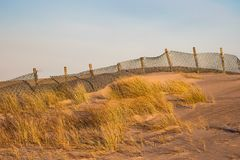 Düne auf dem Strand in Warnemuende, Deutschland Stockfotografie