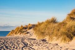 Düne auf dem Strand in Warnemuende, Deutschland Stockfotos