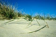 Düne-Gras Stockbild