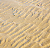 Düne Marokko im nassen Sandstrand der Afrika-Braunküstenlinie nahe atlan Lizenzfreie Stockfotografie
