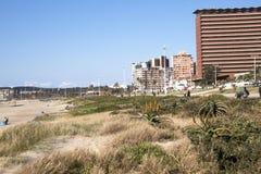 Düne Rehabiliation an Addington-Strand, Durban Südafrika Lizenzfreie Stockbilder