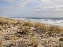 Dünen auf atlantischer Küste von Frankreich Lizenzfreie Stockbilder