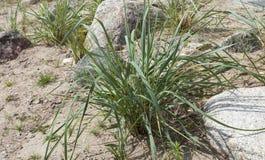 Dünen bedecken im Sand mit Gras lizenzfreie stockbilder