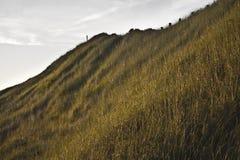 Dünen in den Niederlanden stockfotos