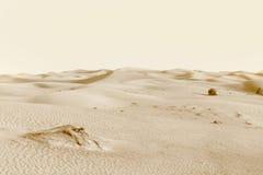 Dünen in der Wüste Stockfotos