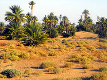 Dünen in Erg Chebbi-Wüste Stockbilder