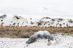 Dünen von Weiß versandet Nationaldenkmal Lizenzfreie Stockfotografie
