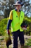 Dünenwiederherstellung in Gold Coast Queensland Australien Lizenzfreie Stockfotos