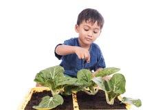 Düngemittel des kleinen Jungen zum Gemüse in den Töpfen Stockbilder