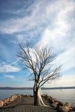 Dünne Wolken, blauer Himmel und bloßer Baum auf dem Hudson haben ein Bankkonto Lizenzfreie Stockfotos