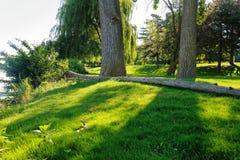 Dünner Baum unten Lizenzfreie Stockfotos