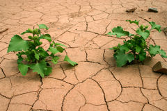 Dürre. Lizenzfreie Stockbilder