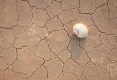 Dürre, Affe Stockfoto