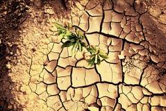 Dürre, Anlagen, die in der trockenen Erde wachsen Lizenzfreie Stockfotos