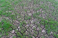 Dürre, Anlagen, die in der trockenen Erde wachsen Stockfoto