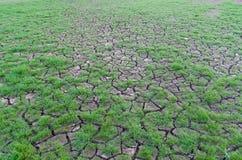 Dürre, Anlagen, die in der trockenen Erde wachsen Lizenzfreies Stockfoto
