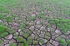 Dürre, Anlagen, die in der trockenen Erde wachsen Lizenzfreie Stockfotografie