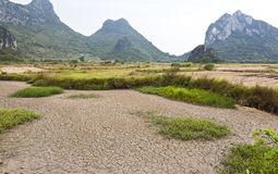 Dürre in den Reis-Bauernhöfen stockbilder