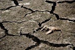 Dürre - der Fluss, der oben mit getrocknet wurde, starb globale Erwärmung der Krabbe lizenzfreies stockbild