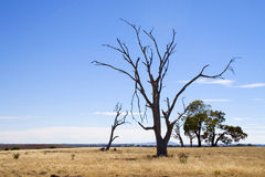Dürre getroffener Baum Lizenzfreies Stockbild