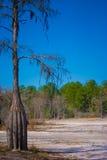 Dürre im Wald Stockfotos