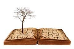Dürrenland auf dem offenen Buch. Stockfotografie