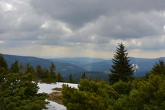 Düstere Berglandschaft Snowy mit scheuern Kiefern, Tschechische Republik, Europa Lizenzfreies Stockfoto