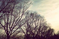 Düstere Eiche im Winter Lizenzfreie Stockfotos