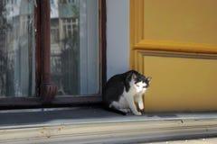 Düstere Katze Stockfotos