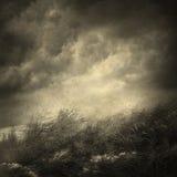 Düstere Landschaft Stockbilder