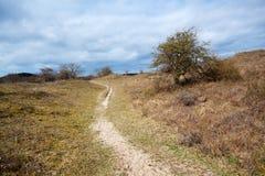 Düstere Landschaft mit Baum Lizenzfreies Stockfoto